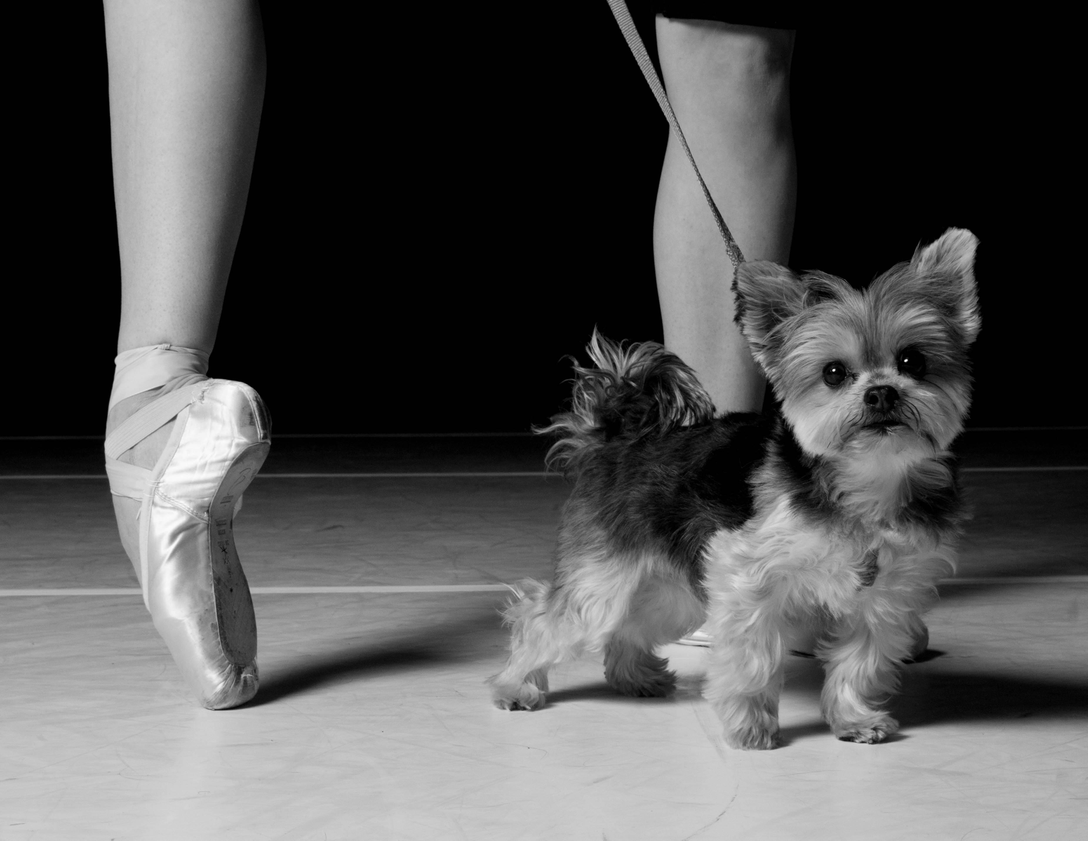 Grand Rapids Ballet's 'Pas & Paws' will warm hearts